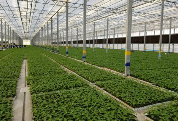 ایجاد 6.5 هکتار گلخانه در اسدآباد